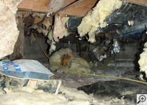 A messy crawl space filled with rotting insulation and debris in Hope.