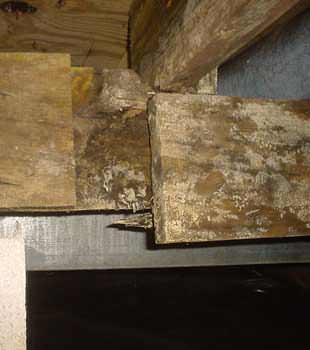 Extensive basement rot found in Langley by Basement Systems Vancouver