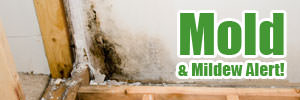 Home mold in Ladner