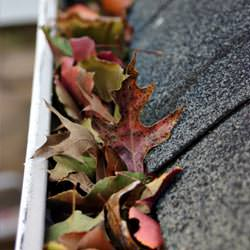 Clogged gutters filled with fall leaves  in Becarra